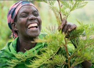 Black person laughing behind a young tree